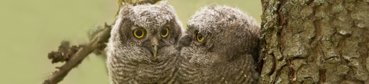 Two owls perched