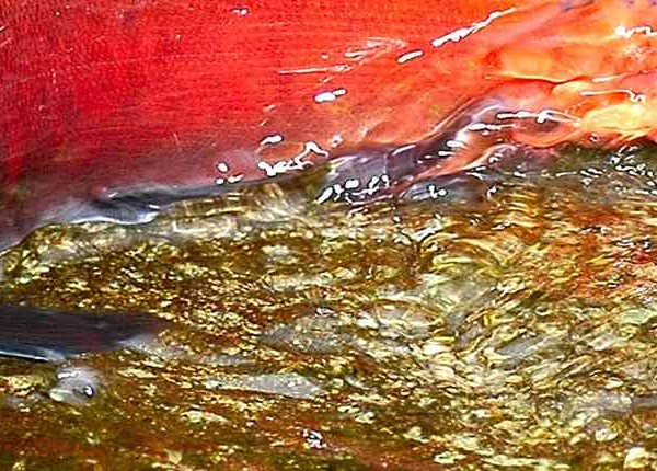 Kokanee single Brian Sperling Sept 2005-min